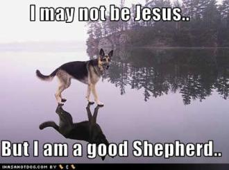 funny-dog-pictures-jesus-shepherd