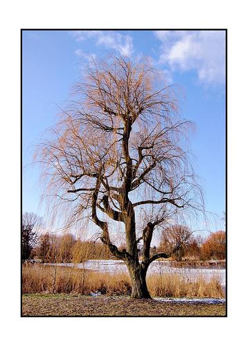 sunday-tree