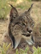 The Go Deep List Lynx