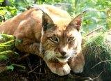 Weekend List Lynx