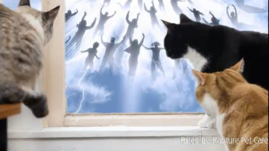 Cats Watching the Rapture - from Rapture Pet Care