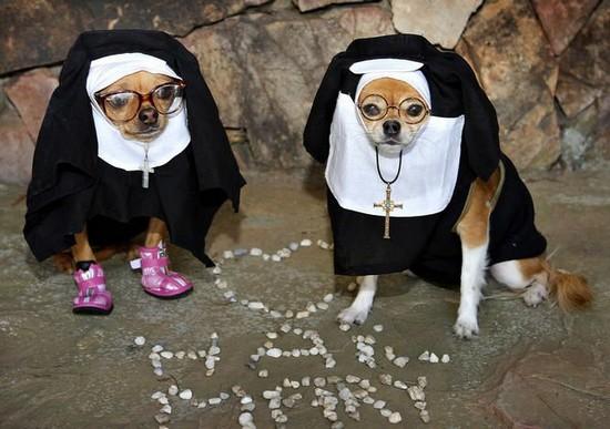 Hail Mary dogs