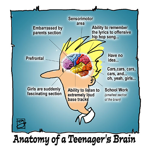 Teenager's Brain