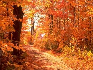 fall-scene