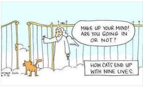 How Cats Ended Up With Nine Lives