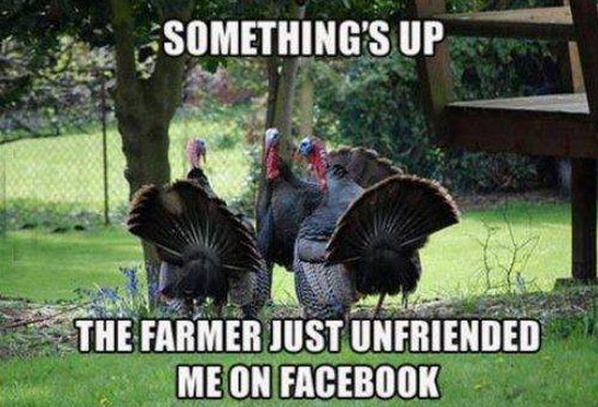 turkey-and-the-farmer