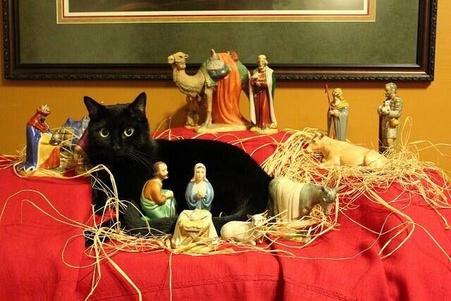 Feline Nativity