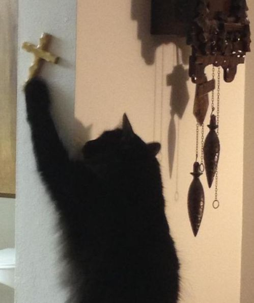 "Honestly, we have no idea what's going on in this picture, but they gave it the caption, ""For cats who are compelled by the power of Christ, we pray. """