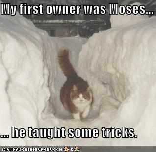 cat-can-part-snow