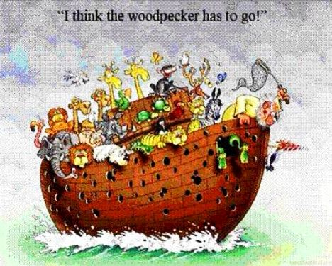 Noah Woodpecker