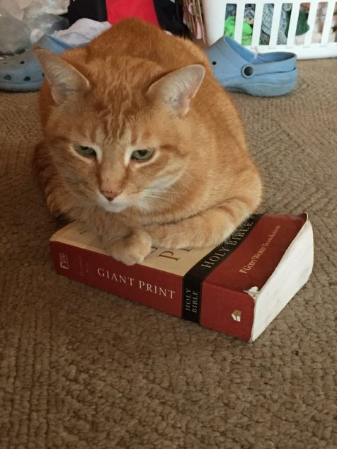 Bible Loving Cat